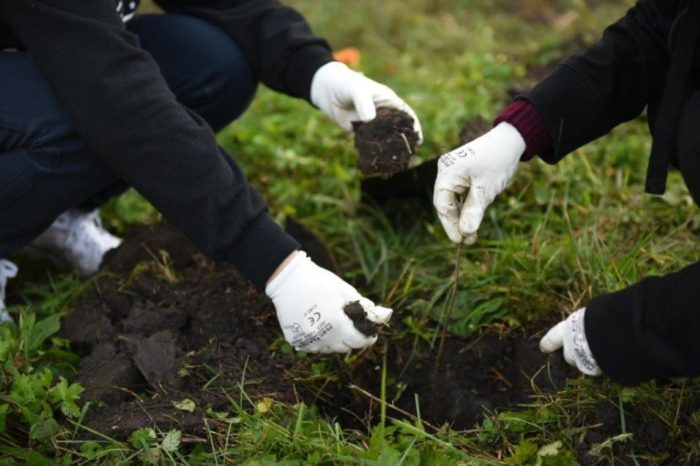 """OMV Petrom contributes 1.5 million euros, for the second year, to the afforestation campaign """"Romania plants for tomorrow"""""""